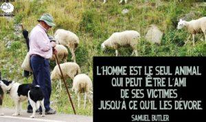 Citation Samuel Butler