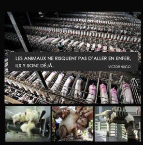 Animaux exploitation végétarien vegan