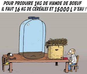 Pour produire 1 kg de viande de boeuf, il faut 16 kg de céréales et 15 000 l d'eau
