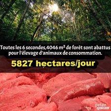 Végétarien vegan consommation de viande